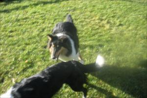 Dog Training Olympia Wa